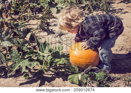 Young boy picking a fall pumpkin
