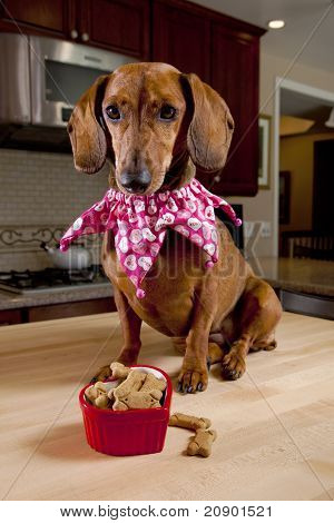 Dog With Treats In Heart Shaped Bowl
