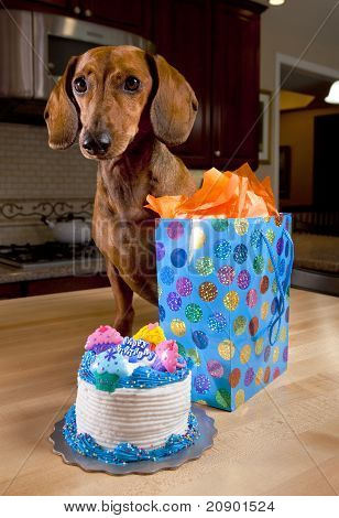 Dog With Birthday Cake And Present