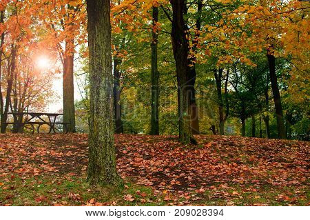 Autumn. Fall scene. Beautiful Autumnal park with picnic table. Beauty nature scene. Autumn landscape, Trees and Leaves, forest in Sunlight Rays