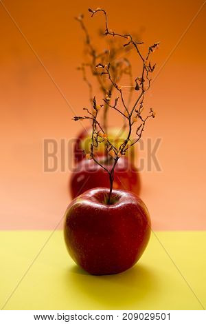 Ripe red apples with a plant like a tree