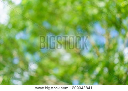 Defocused lights abstract green round bokeh background