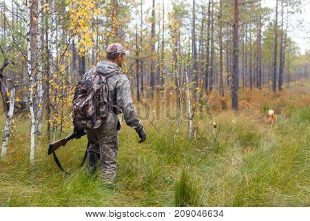 hunter in camouflage with shotgun walking in the pine forest