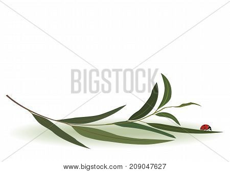 vector divider with ladybird and branch of eucalyptus