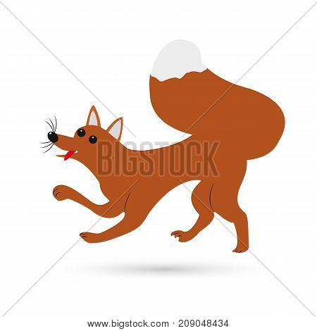 Red fox on white background. Vector illustration