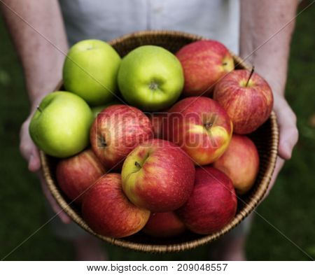 Hands holding apples organic produce from farm
