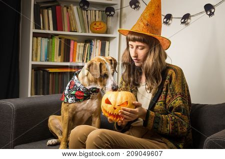 Girl in halloween witch hat sit on the sofa with dog interested in jack'o'lantern. Young woman indoors with puppy holds a carved halloween pumpkin in hands and pet is curious and funny about it