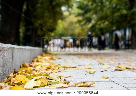 Autumn in the city park.  View from ground level. Beautiful bright leaves on the roadside.
