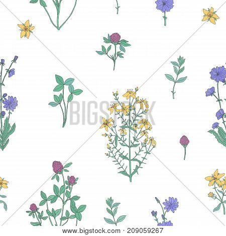 Elegant botanical seamless pattern with flowering herbs on white background. Gorgeous meadow flowers and blooming medicinal plants - clover, chicory, hypericum. Vector illustration for fabric print