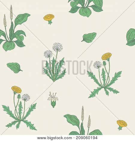 Gorgeous natural seamless pattern with flowering herbaceous plants. Beautiful wild flowers and blooming herbs - dandelion and plantain. Vector illustration for wrapping paper, wallpaper, backdrop