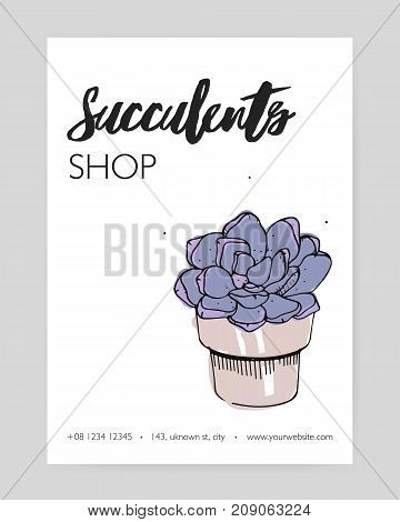 Flyer template with hand drawn echeveria growing in clay pot and place for text on white background. Stone rose, potted desert plant, decorative houseplant. Vector illustration for succulent shop ad