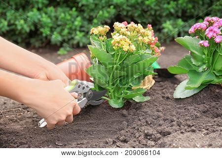 Woman using pruner for flowers in garden