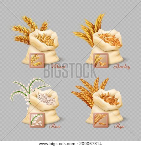 Agricultural cereals sacks isolated on transparent background. Grain harvest barley and rice, vector illustration