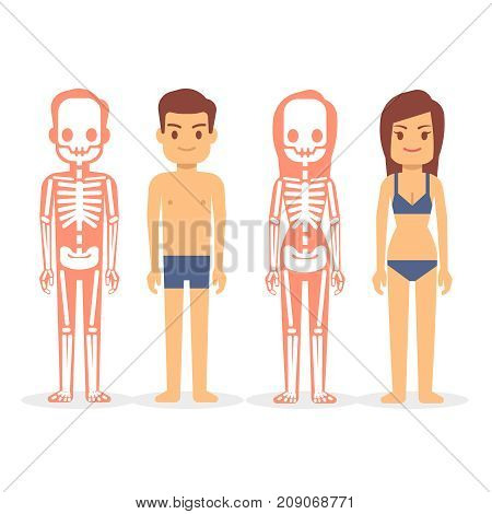 Man and woman, male and female skeletons isolated on white background. Man and woman skeleton, human female and male body vector illustration