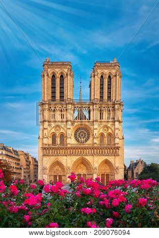 Notre-dame Cathedral In Paris France With Roses