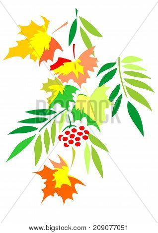 A composition of autumn leaves in a flat style. Maple, grapes, ash and mountain ash. Isolated on the background of a white color.