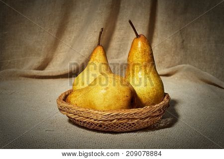 Still life with pears in a small wicker basket on the background of a curtain of coarse cloth. On pears are drops of water