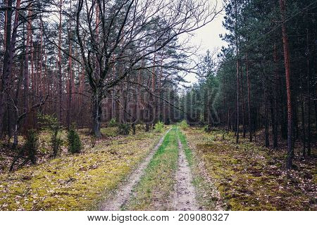 Forest road in forest complex called Kampinos near Warsaw Poland