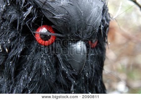 Scary Owl Decoration