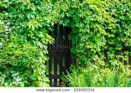 Fence gate in the lush vegetation hedge.
