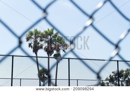Palm trees framed by chain link fence in prison, gulag, labour camp, school or unwanted institution. Dreaming of freedom.