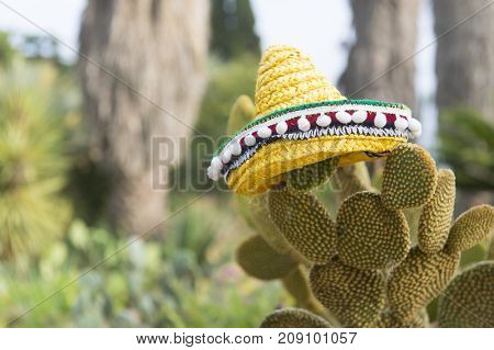 Spanish cactus with typical Sombrero on top