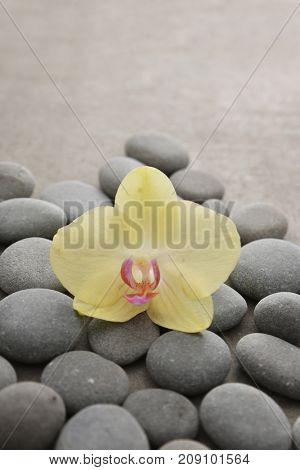 Yellow orchid with gray stones on gray background