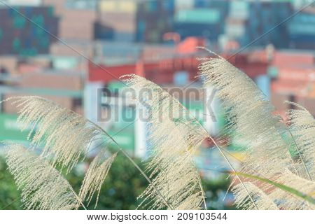 closeup of reed grass with blurred freight terminal on background.
