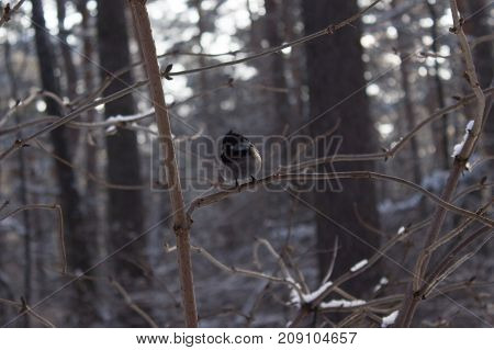 A bird sitting on a branch in winter forest