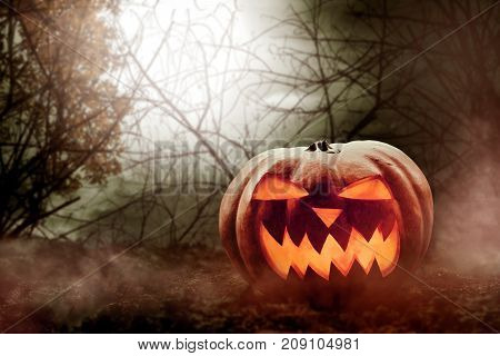 Halloween pumpkin on the forest at night