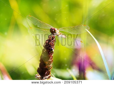 dragonfly macro on a green background in the park summer beautiful background