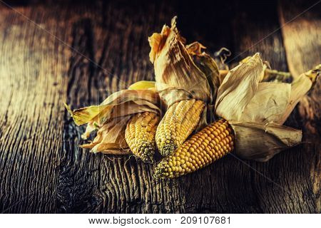 Corn. Dry Corncobs On Rustic Oak Table