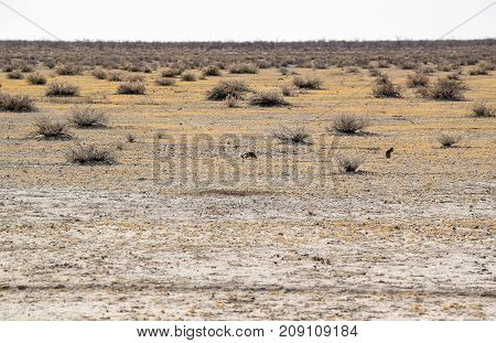 sandy savanna scenery seen in Namibia Africa