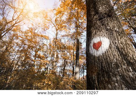 Picture of red heart in white circle painted on tree in forest
