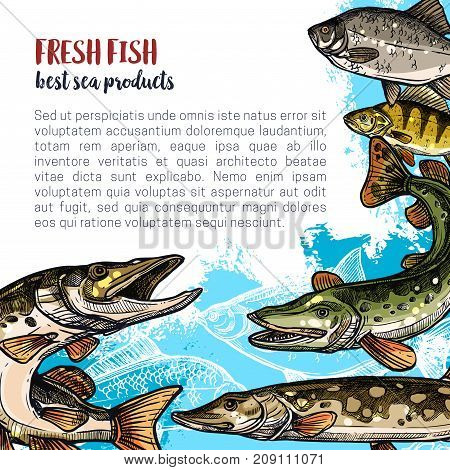 Fish fresh product poster template. Sea and river fish animal sketch banner of ocean perch, trout, pike, carp, crucian and bream for fishing sport, fish market or restaurant menu design
