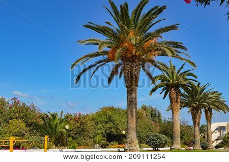 ow of palm trees along Maleme road in western Crete