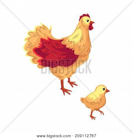 Two funny chicken, hen and baby chick, cartoon vector illustration isolated on white background. Funny cartoon style chicken, hen and chick, vector illustration