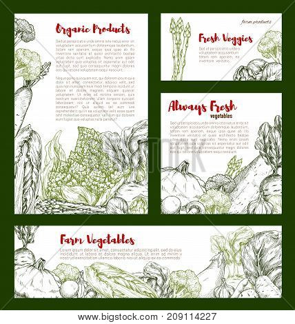 Vegetable sketch banner of cabbage and veggies. Cabbage, broccoli and onion, eggplant, garlic and radish, potato, zucchini, beet, asparagus and brussel sprouts, squash, romanesco poster design