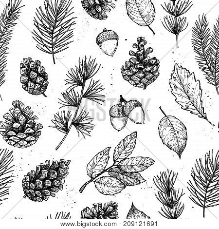 Seamless Pattern. Hand Drawn Vector Illustrations - Forest Autumn Collection. Spruce Branches, Acorn