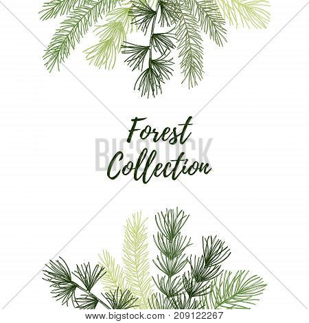 Hand Drawn Vector Illustration - Autumn Frame. Forest Spruce Branches And Fall Leaves. Design Elemen
