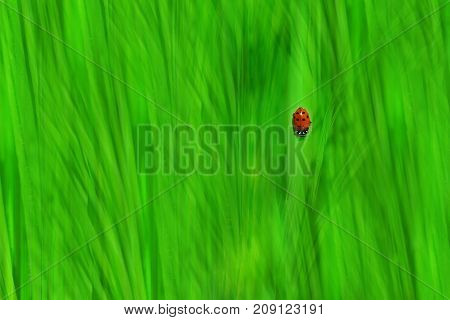 Conceptual Image of Lone Ladybug on Blurred Bright Green Grassy Background