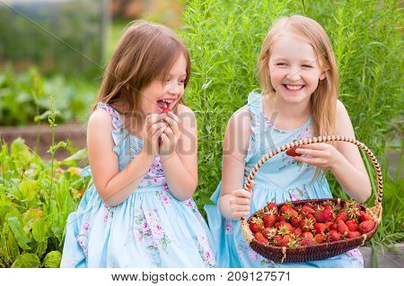 Happy little sisters have fun eating organic strawberries in the garden. Warm summer day. A delicious vitamin diet. Family farm active rest. Friendship of sisters. Relationship in the family.
