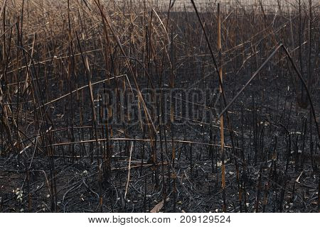 After The Burnt Ashes Of Reeds