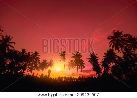 Silhouette Coconut Palm trees on tropical beach with colourful sunset sky in twilight time at Phuket province Southern of Thailand.