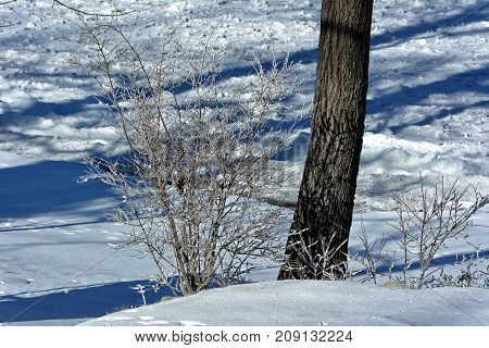 Winter trees with half freezed lake background