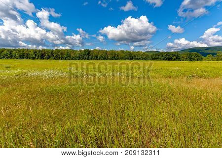 Summer view with trees, clouds and blue sky