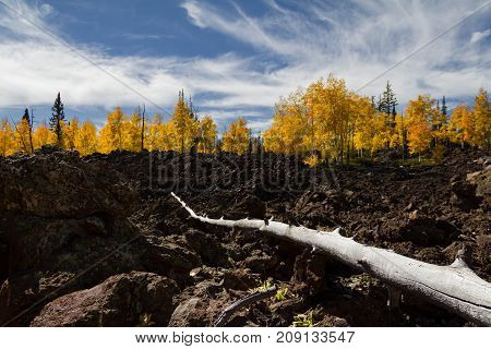 Landscape perspective of a fallen branch on a lava field with amazing autumn foliage in Dixie National Forest in Utah.