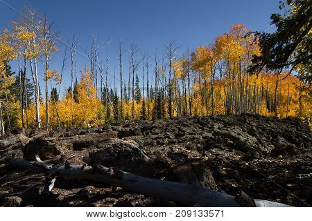 Autumn foliage, barren trees, and a fallen branch in the lava field of Dixie National Forest in Utah.