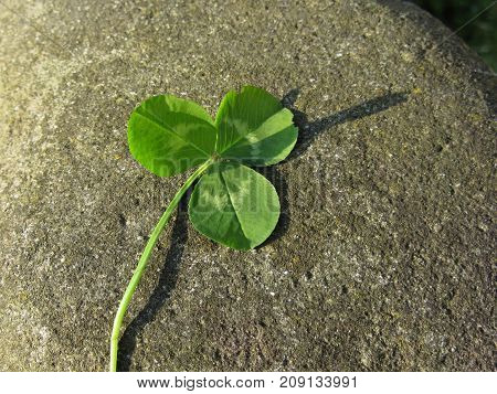St. Patrick's Day background with clover or shamrock on a river stone