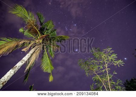 Shining sky with stars on a background of palm trees. Puerto Princesa